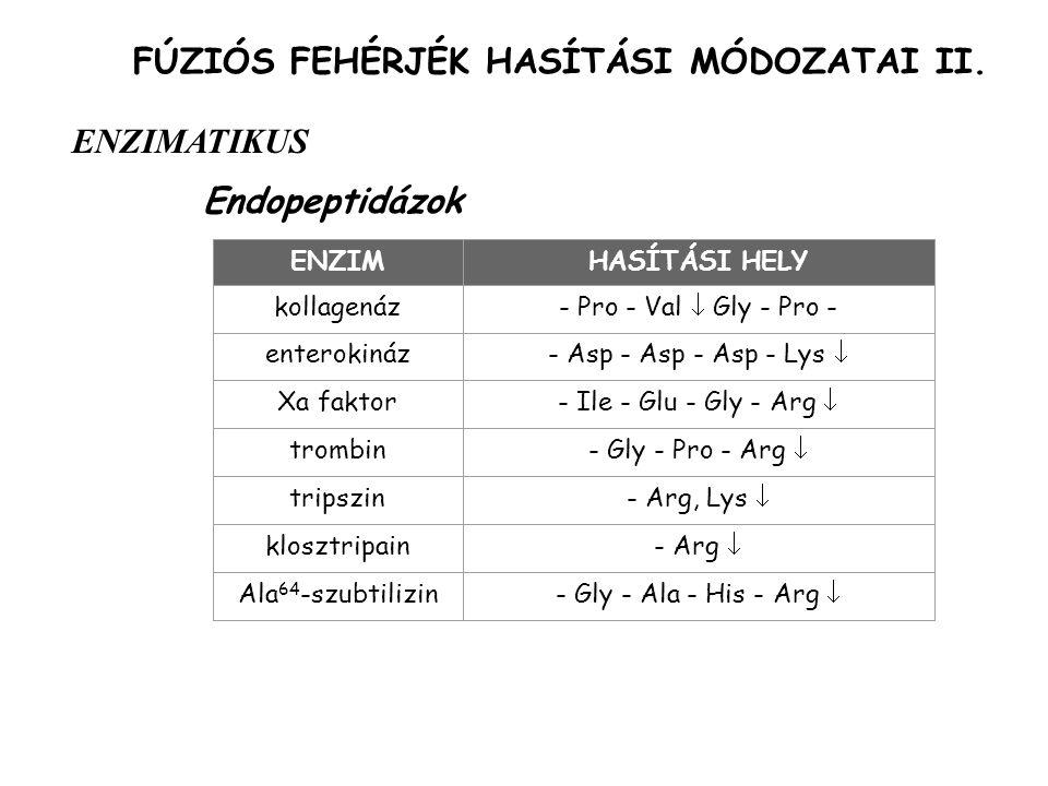 FÚZIÓS FEHÉRJÉK HASÍTÁSI MÓDOZATAI II.