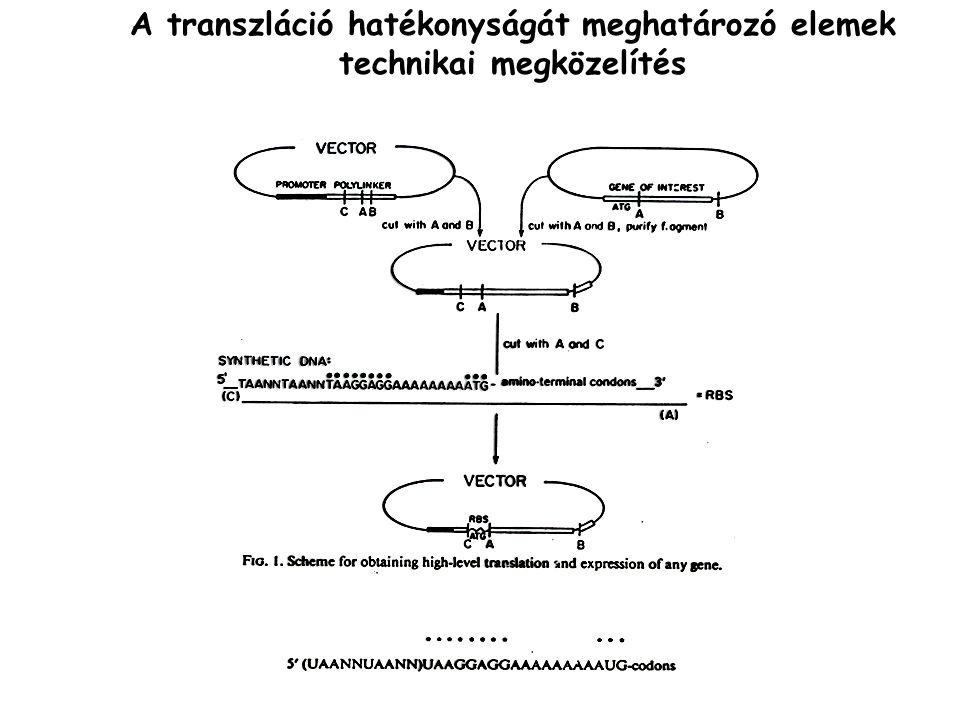 A transzláció hatékonyságát meghatározó elemek technikai megközelítés