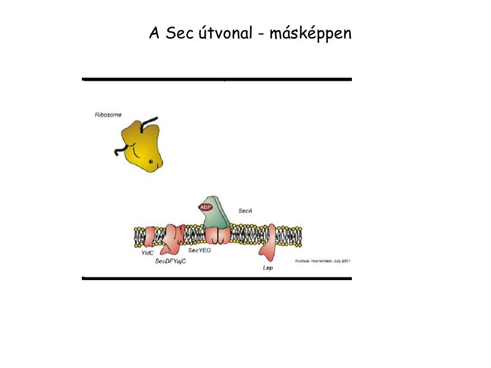 A Sec útvonal - másképpen