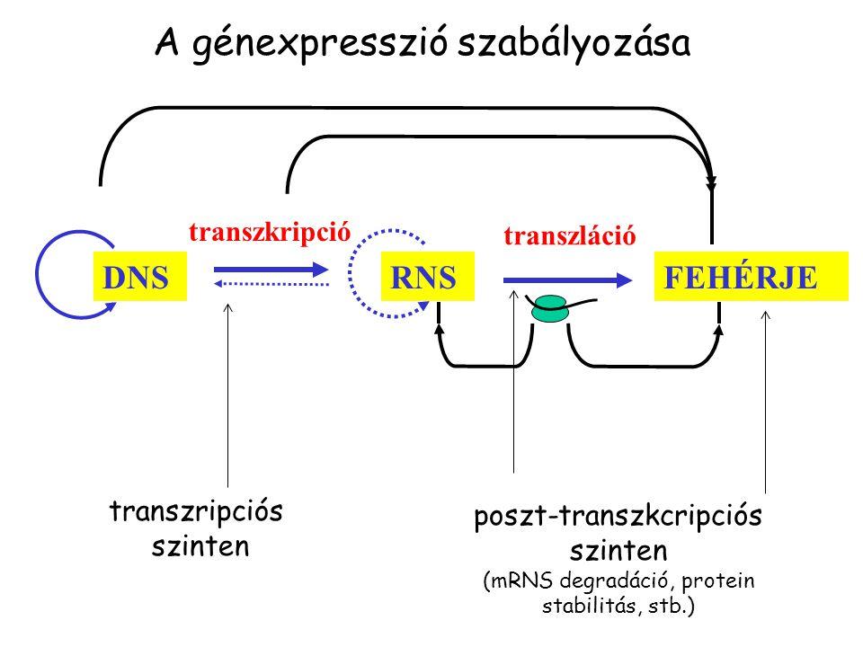 A génexpresszió szabályozása