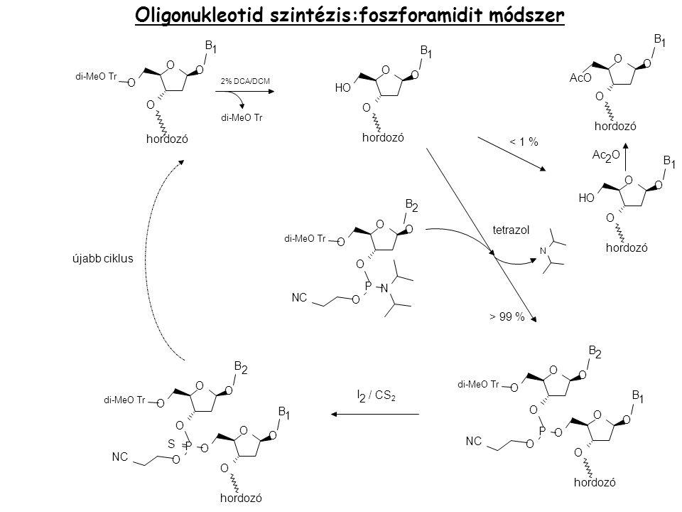 Oligonukleotid szintézis:foszforamidit módszer