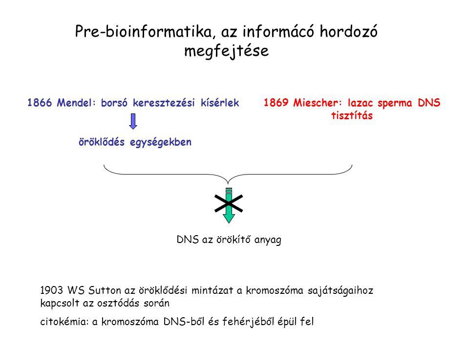 Pre-bioinformatika, az informácó hordozó megfejtése