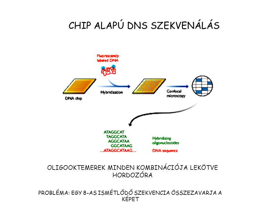 CHIP ALAPÚ DNS SZEKVENÁLÁS