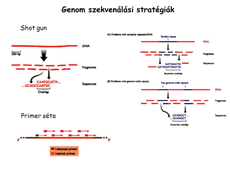 Genom szekvenálási stratégiák