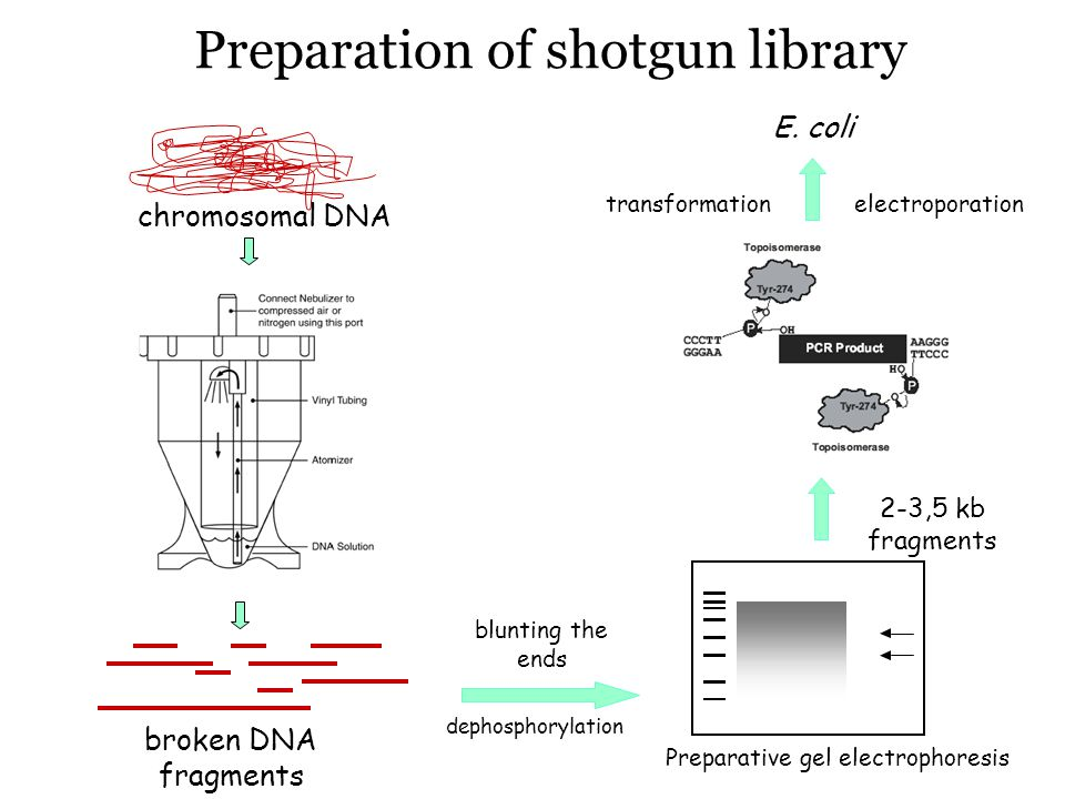 Preparation of shotgun library
