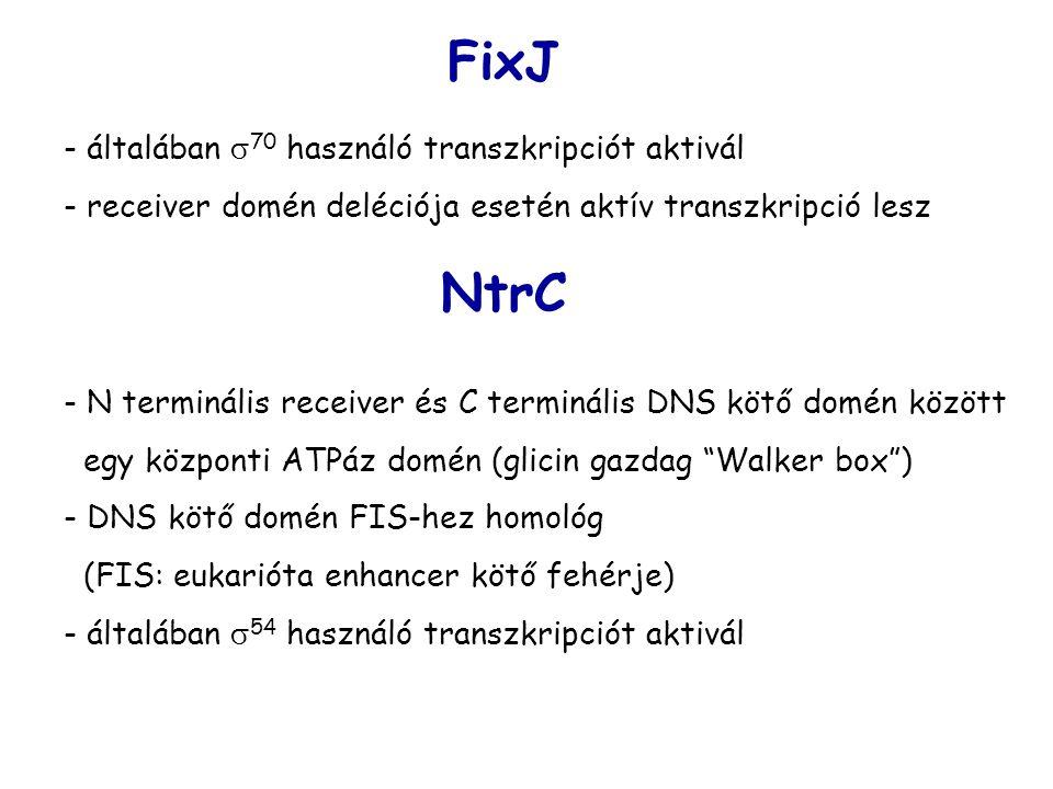 FixJ NtrC - általában 70 használó transzkripciót aktivál