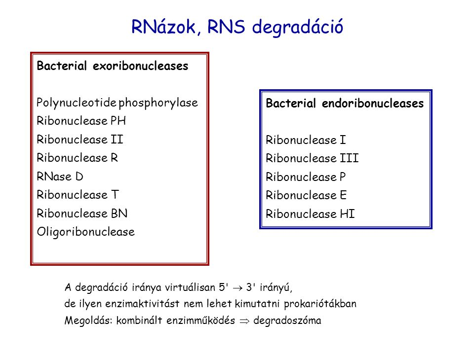RNázok, RNS degradáció Bacterial exoribonucleases