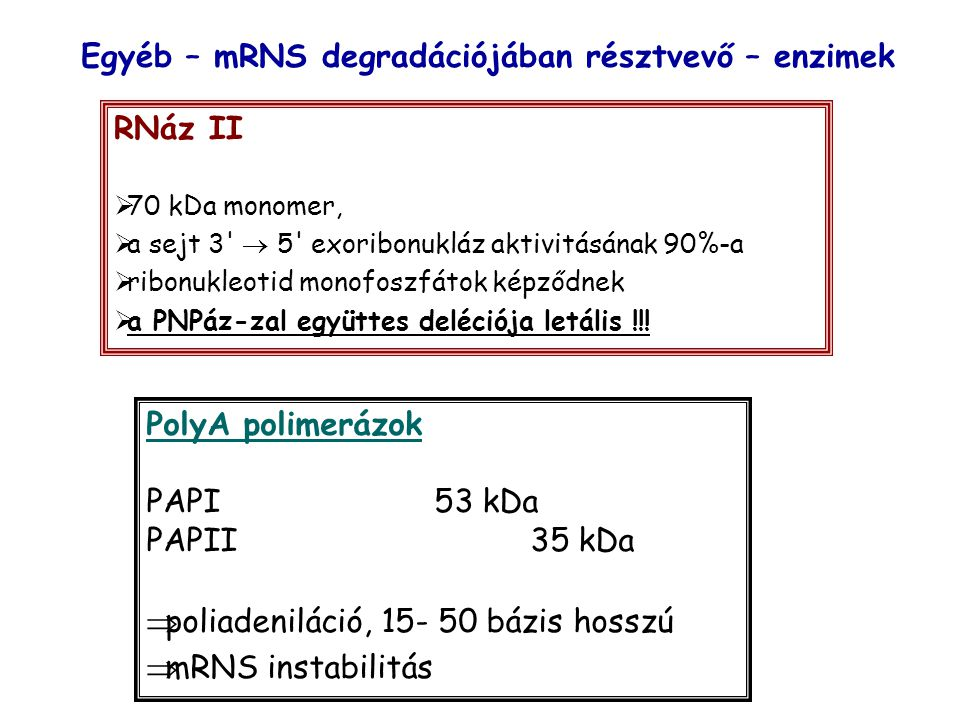 Egyéb – mRNS degradációjában résztvevő – enzimek