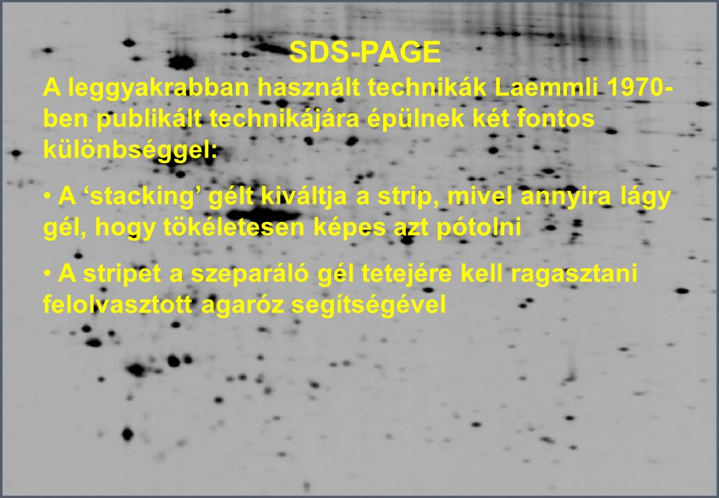 SDS-PAGE A leggyakrabban használt technikák Laemmli 1970-ben publikált technikájára épülnek két fontos különbséggel: