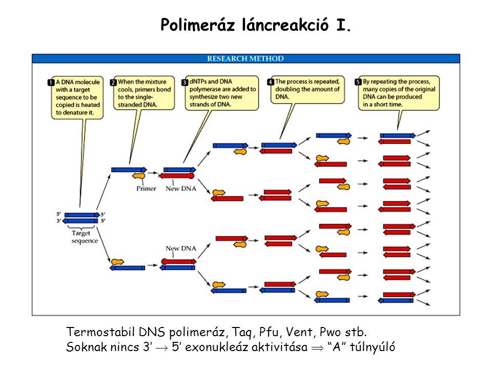 Polimeráz láncreakció I.