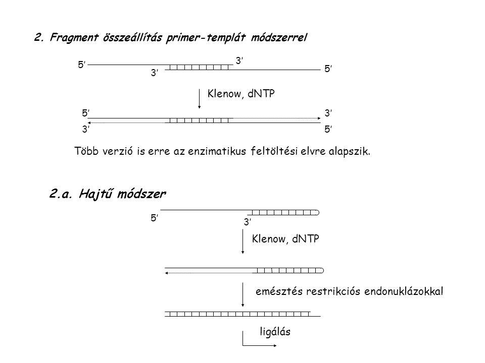 2.a. Hajtű módszer 2. Fragment összeállítás primer-templát módszerrel