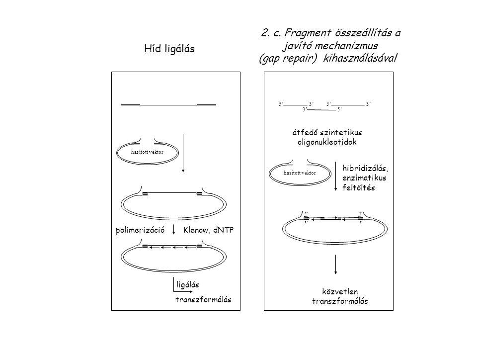 2. c. Fragment összeállítás a javító mechanizmus (gap repair) kihasználásával