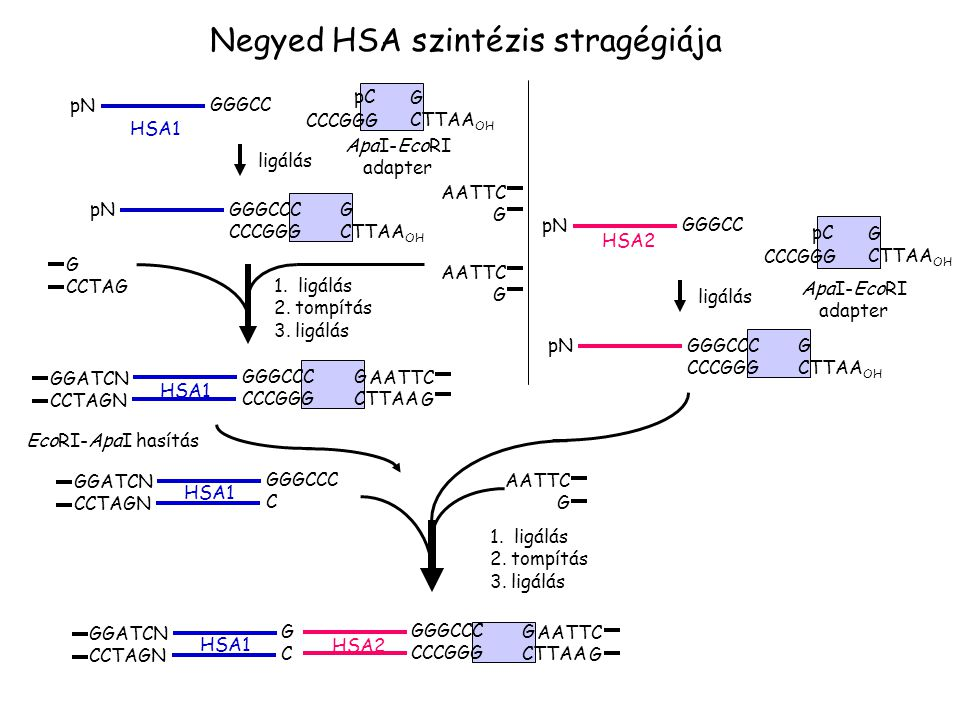 Negyed HSA szintézis stragégiája