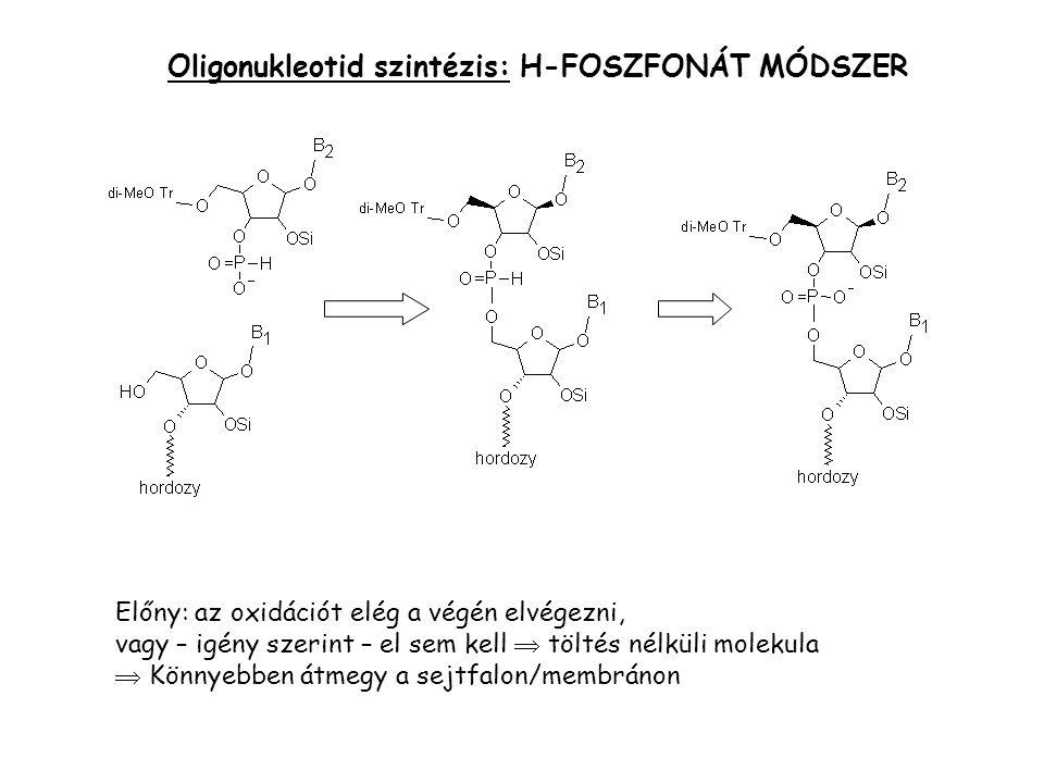 Oligonukleotid szintézis: H-FOSZFONÁT MÓDSZER