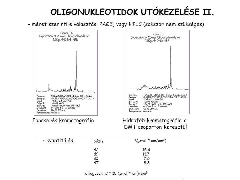 OLIGONUKLEOTIDOK UTÓKEZELÉSE II.
