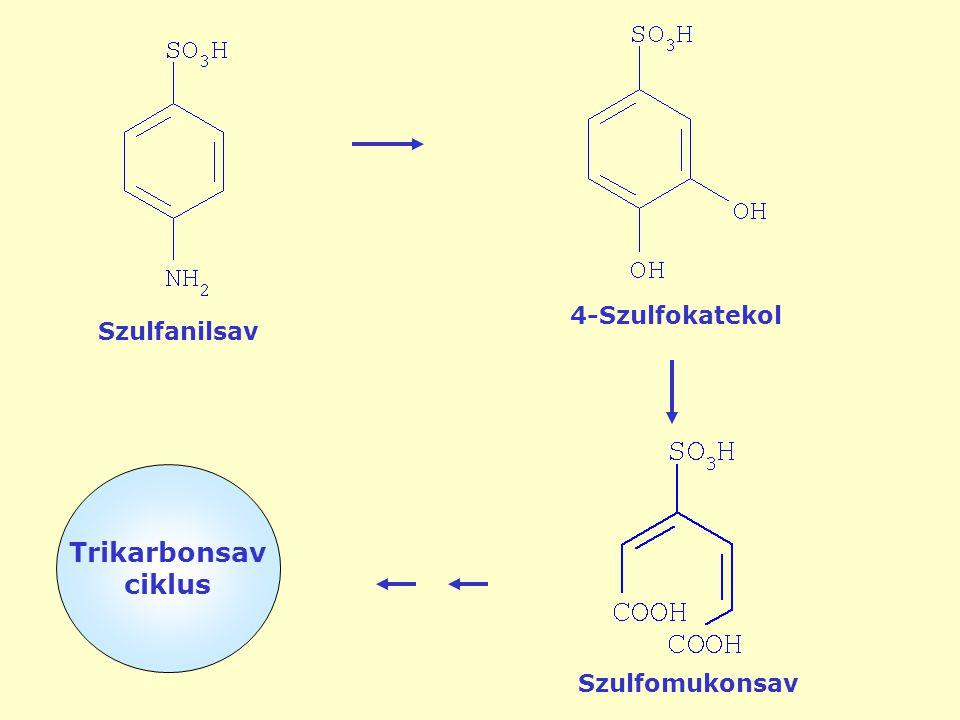 4-Szulfokatekol Szulfanilsav Trikarbonsav ciklus Szulfomukonsav
