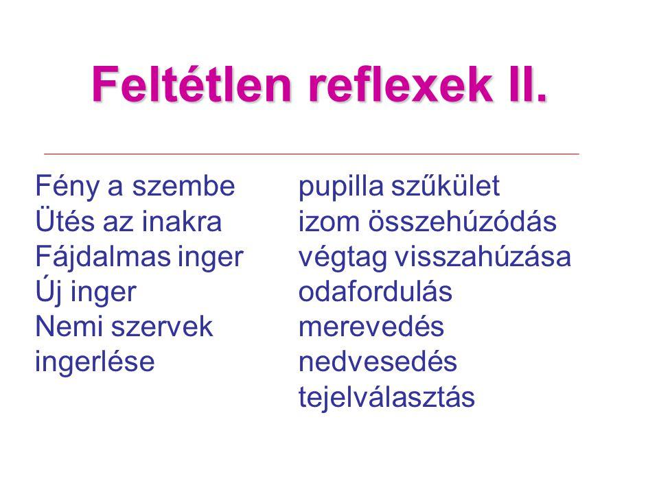 Feltétlen reflexek II. Fény a szembe pupilla szűkület