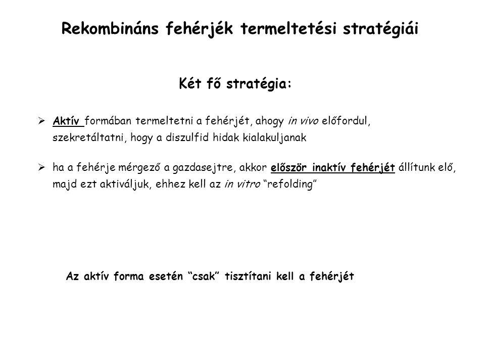Rekombináns fehérjék termeltetési stratégiái