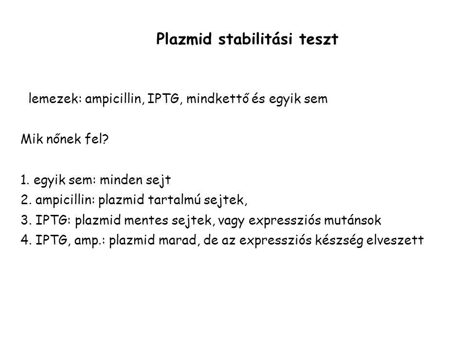 Plazmid stabilitási teszt