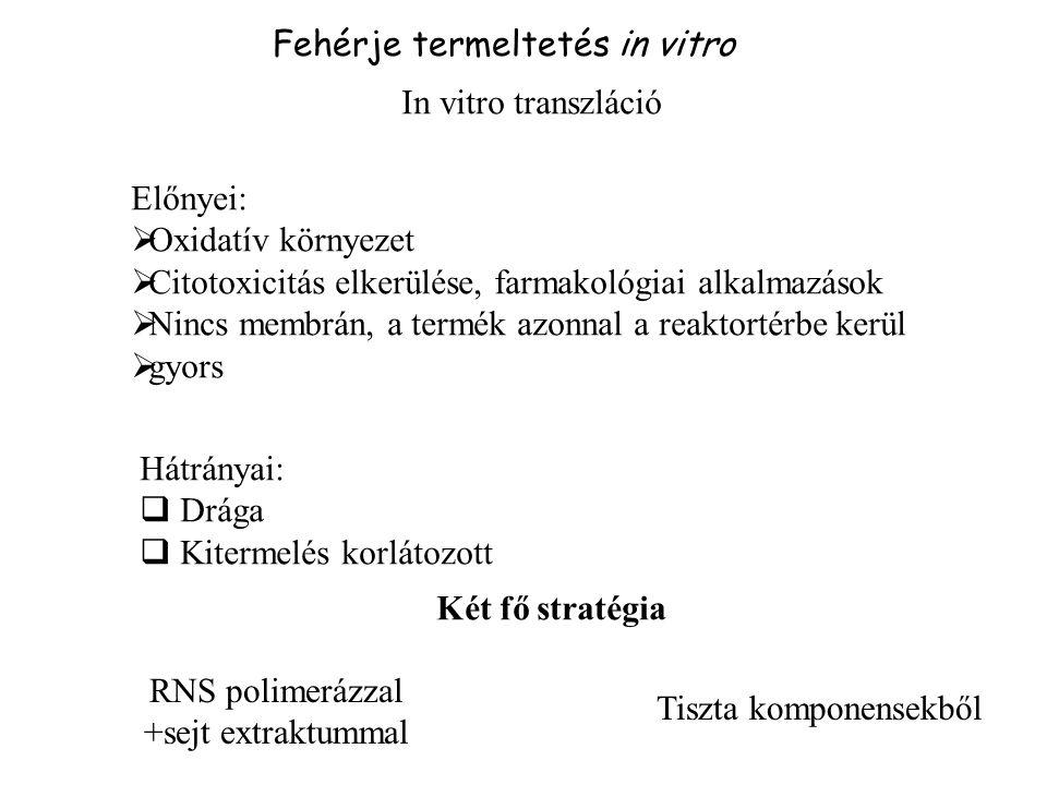 Fehérje termeltetés in vitro