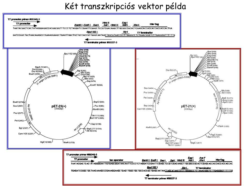 Két transzkripciós vektor példa