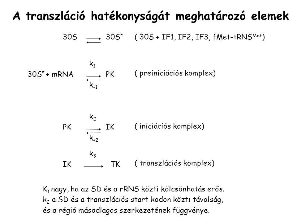 A transzláció hatékonyságát meghatározó elemek