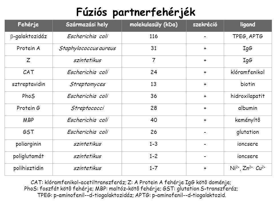 Fúziós partnerfehérjék