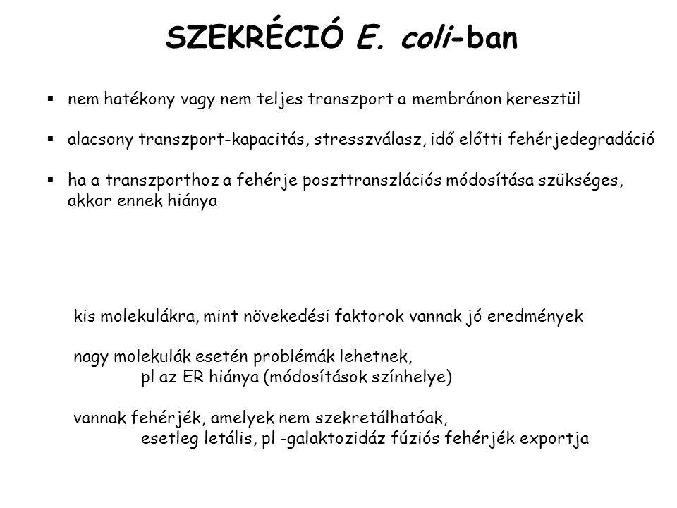 SZEKRÉCIÓ E. coli-ban nem hatékony vagy nem teljes transzport a membránon keresztül.