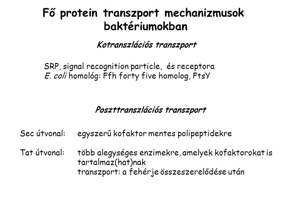 Fő protein transzport mechanizmusok baktériumokban