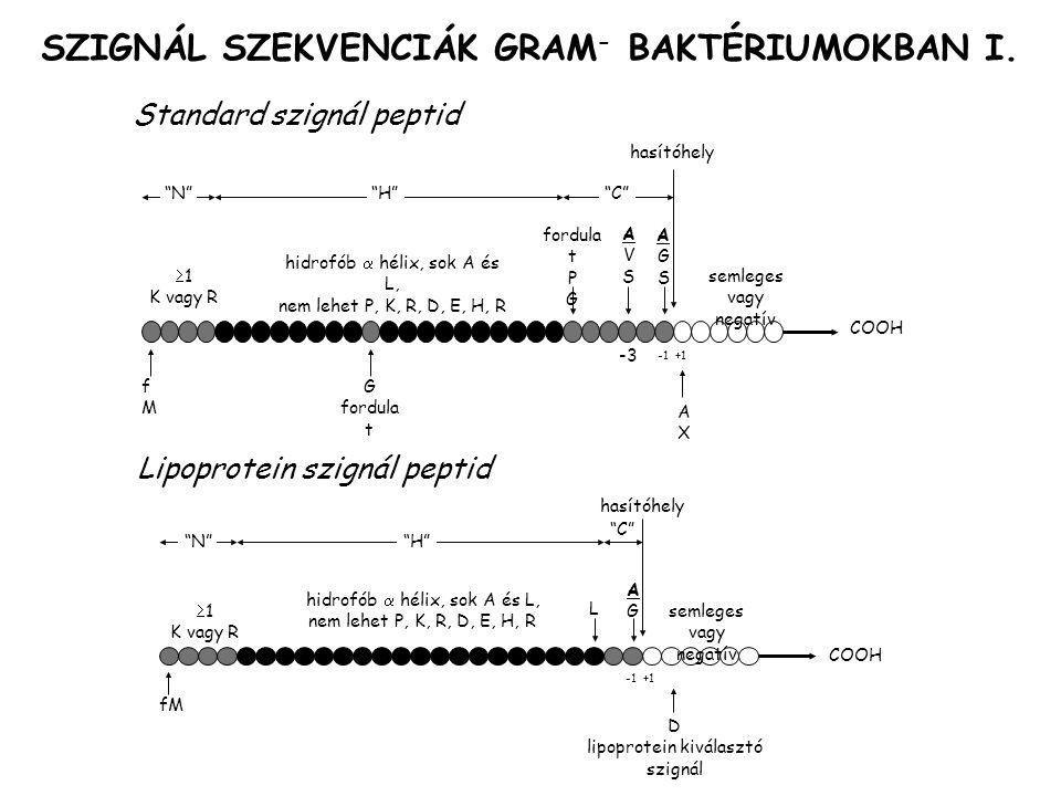 SZIGNÁL SZEKVENCIÁK GRAM- BAKTÉRIUMOKBAN I.