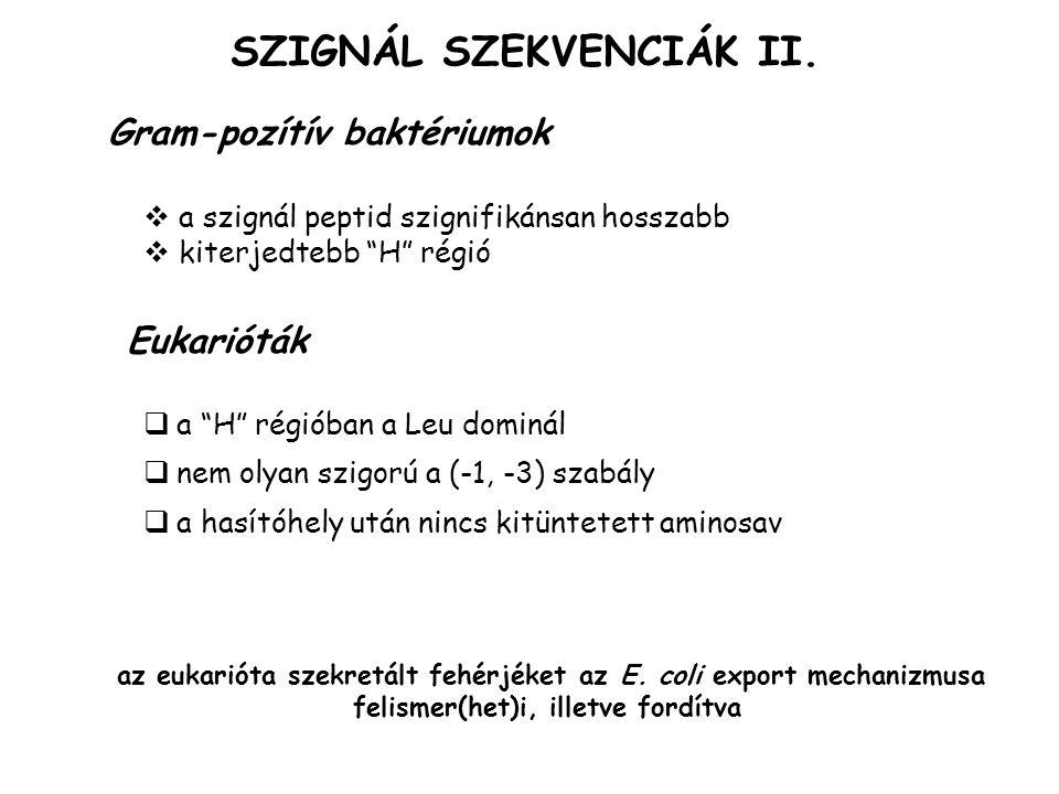 SZIGNÁL SZEKVENCIÁK II.