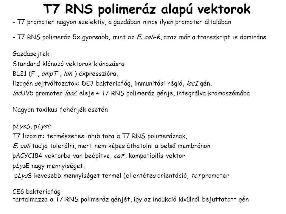 T7 RNS polimeráz alapú vektorok