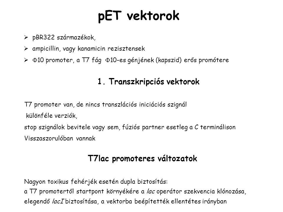 pET vektorok 1. Transzkripciós vektorok T7lac promoteres változatok