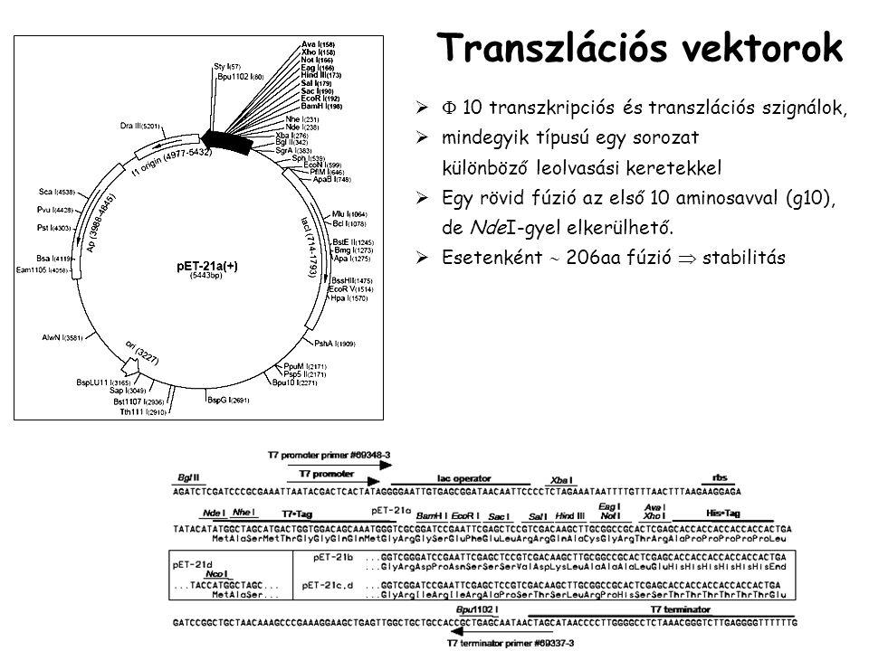 Transzlációs vektorok