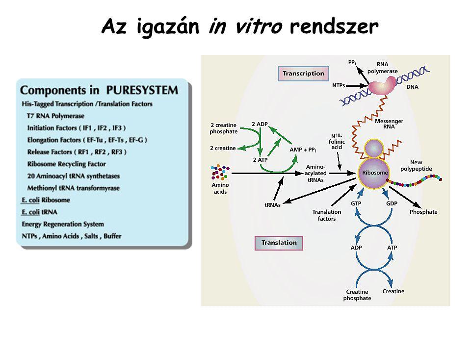 Az igazán in vitro rendszer