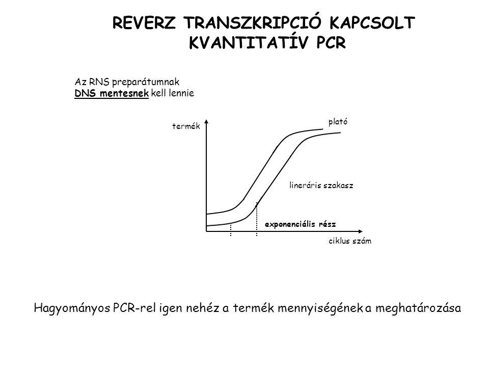 REVERZ TRANSZKRIPCIÓ KAPCSOLT KVANTITATÍV PCR