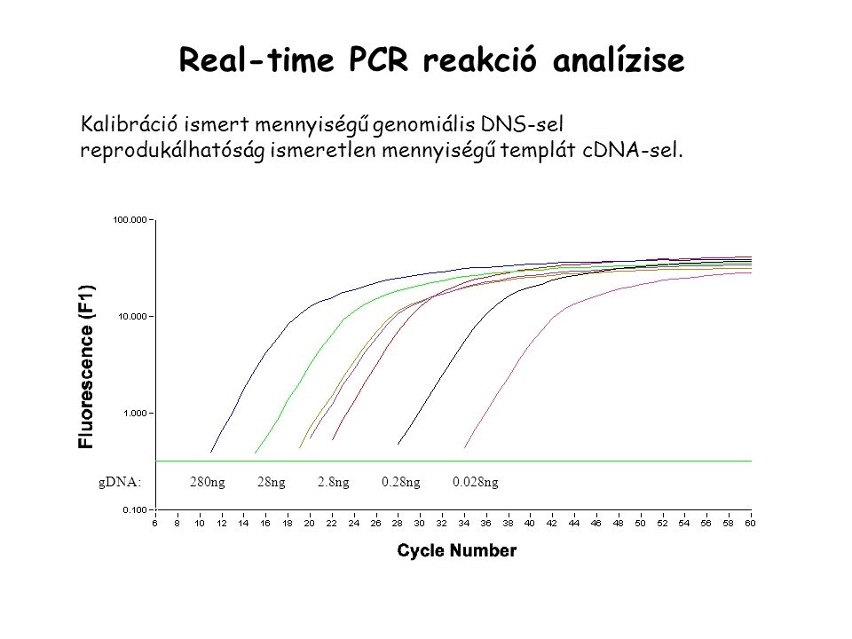 Real-time PCR reakció analízise