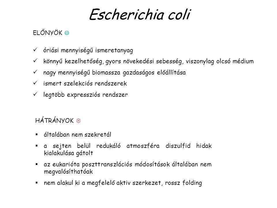 Escherichia coli ELŐNYÖK  óriási mennyiségű ismeretanyag