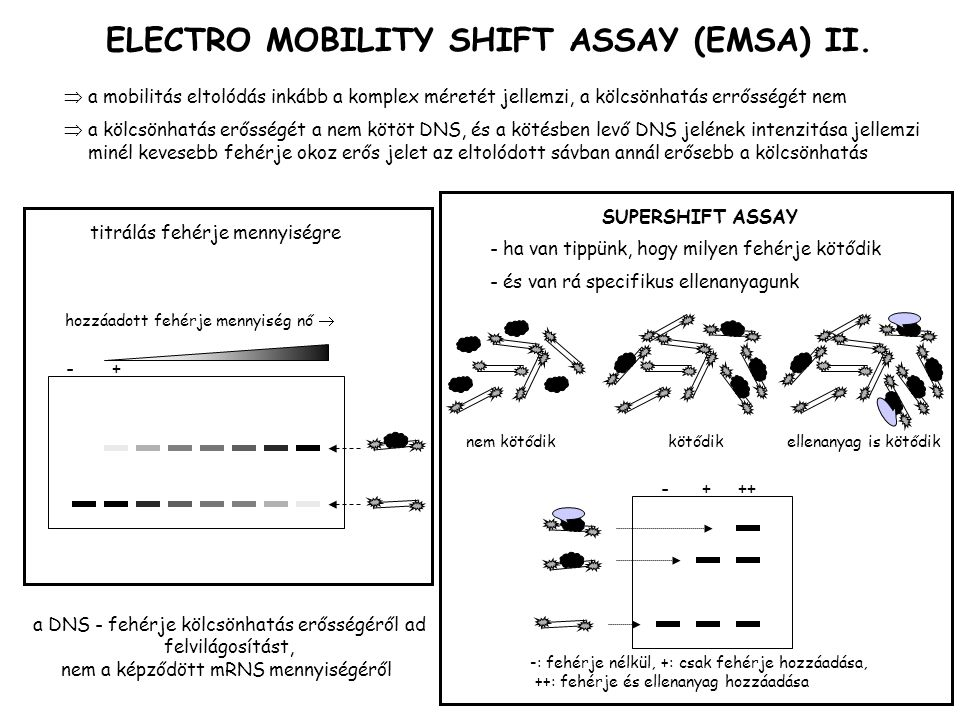 ELECTRO MOBILITY SHIFT ASSAY (EMSA) II.