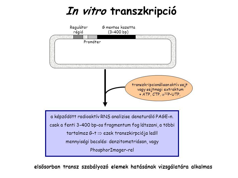 In vitro transzkripció