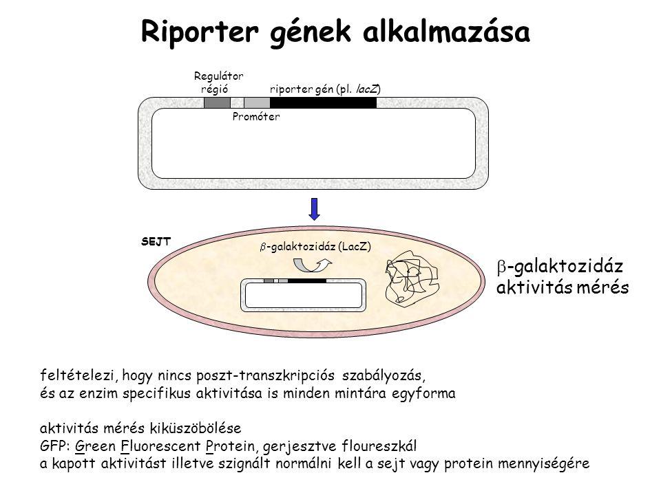 Riporter gének alkalmazása