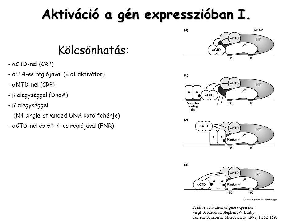 Aktiváció a gén expresszióban I.