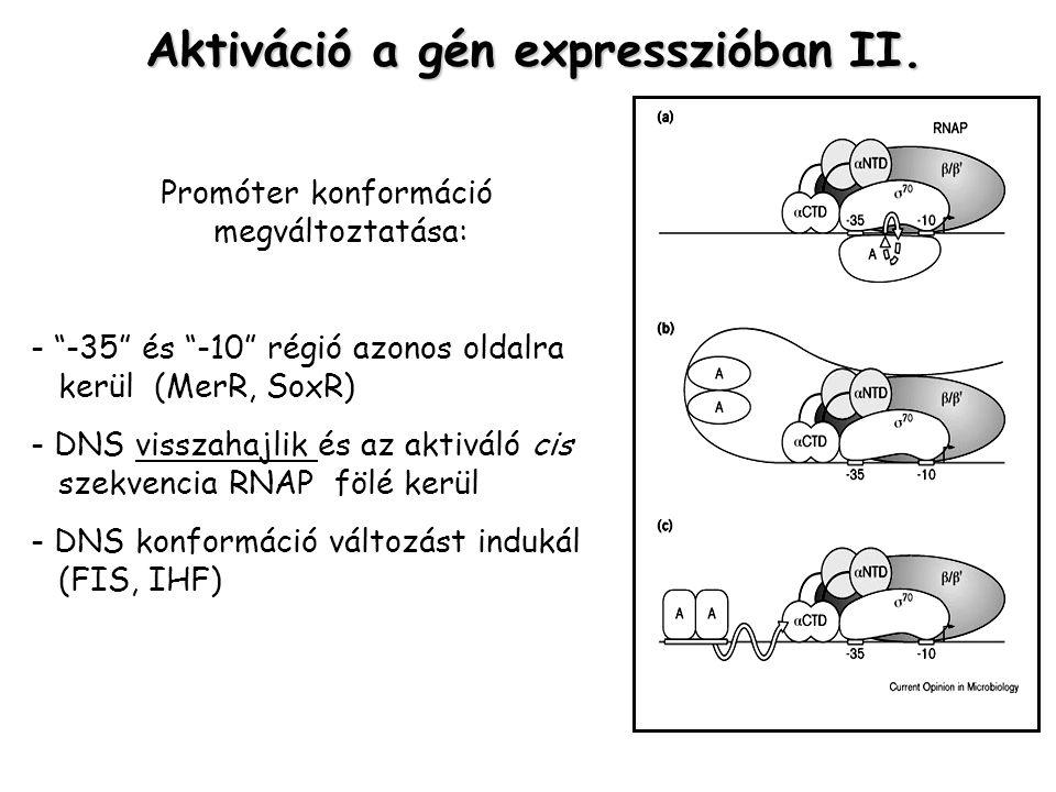 Aktiváció a gén expresszióban II.