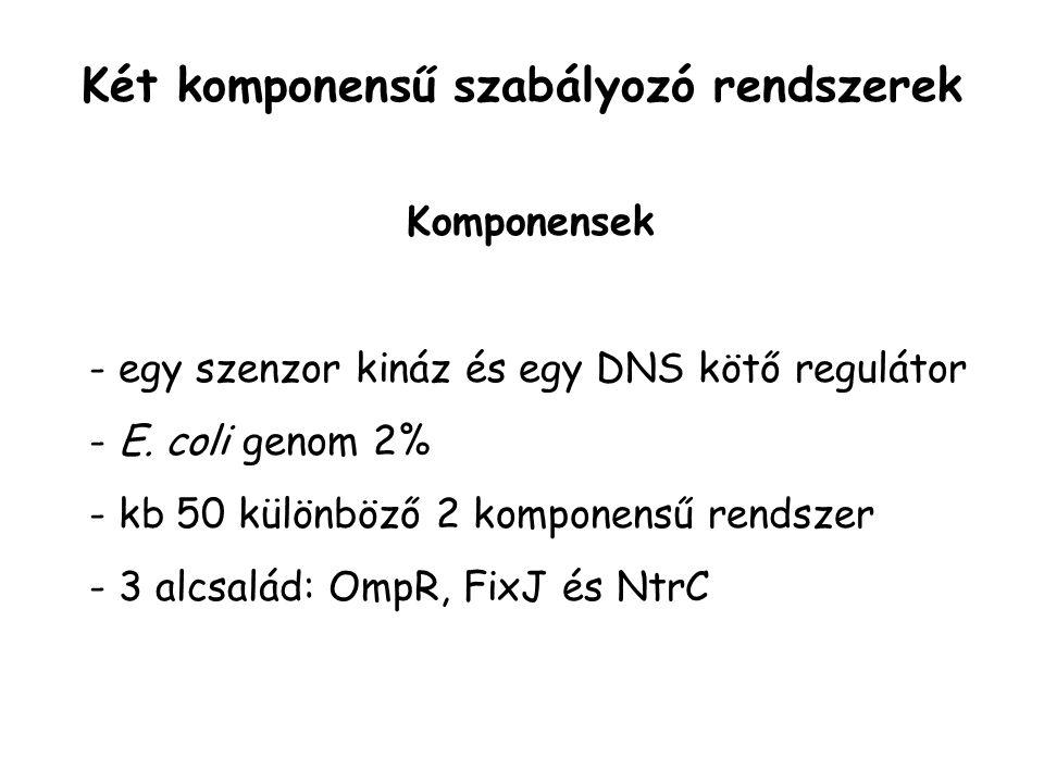 Két komponensű szabályozó rendszerek