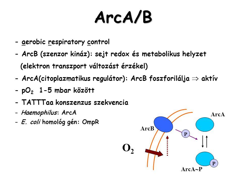 ArcA/B O2 - aerobic respiratory control