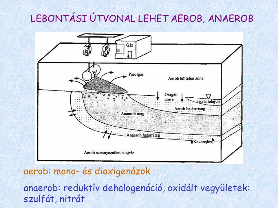 LEBONTÁSI ÚTVONAL LEHET AEROB, ANAEROB