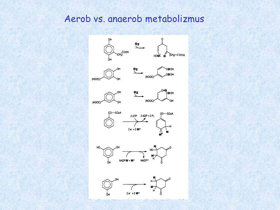 Aerob vs. anaerob metabolizmus