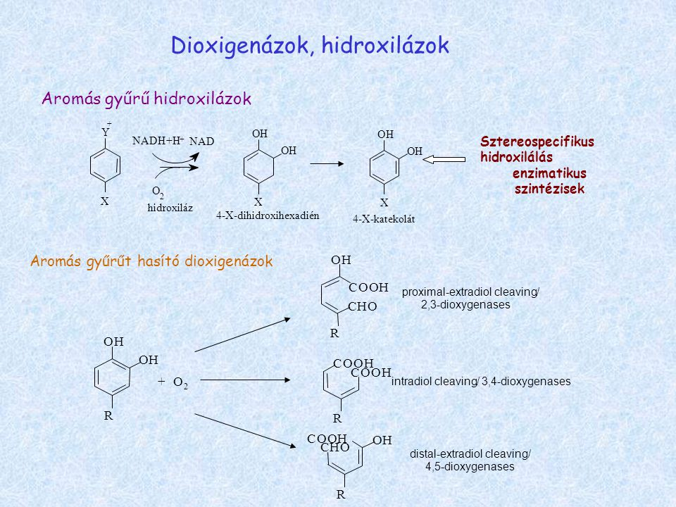 enzimatikus szintézisek