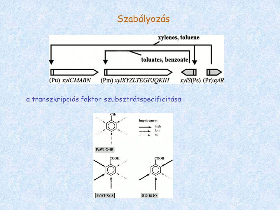 Szabályozás a transzkripciós faktor szubsztrátspecificitása