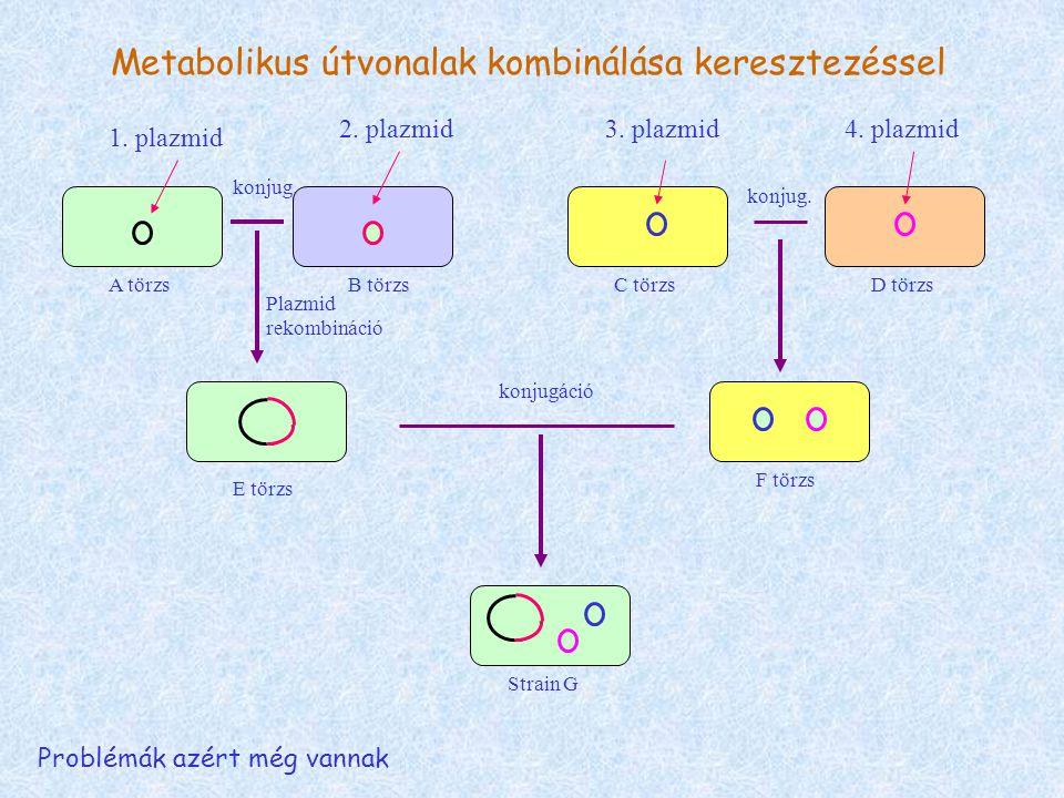 Metabolikus útvonalak kombinálása keresztezéssel